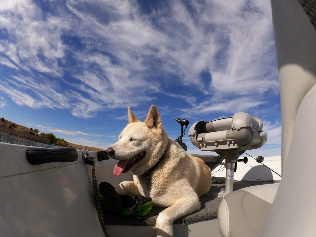 Boat Dog_Jus