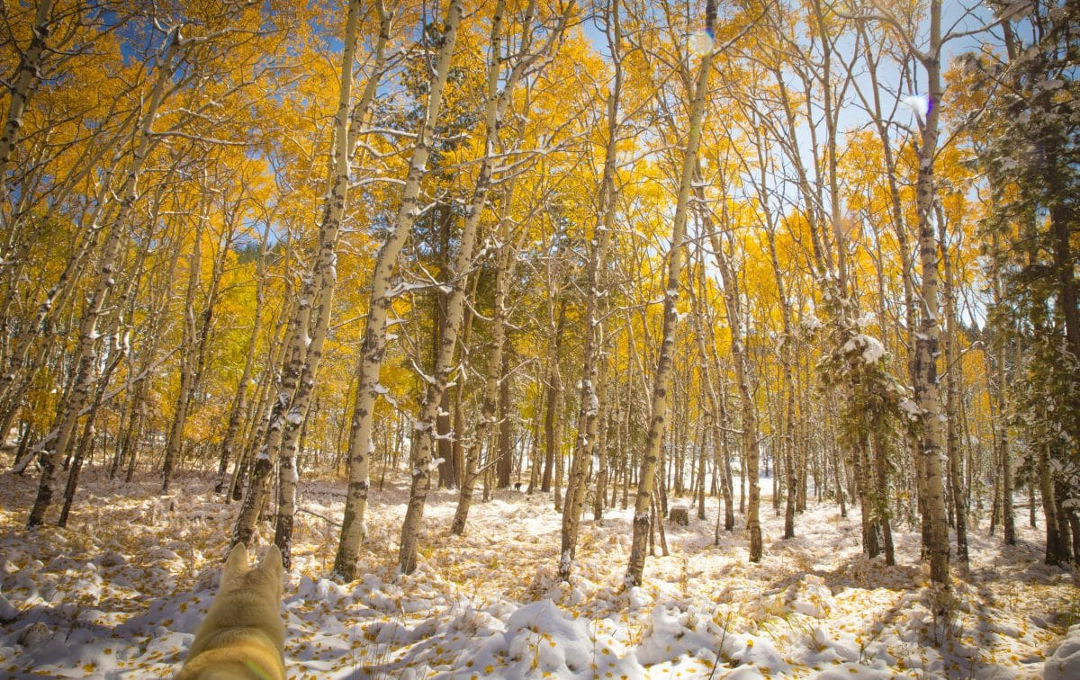 A Photo is Worth 1000 Songs: Seasons Change | Rootfire